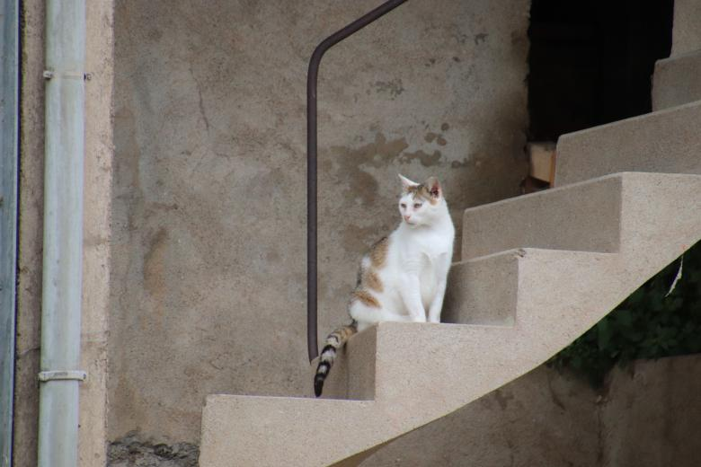 Free Stock Photo of White and beige cat in the middle of a stairway Created by GAIMARD Jacques