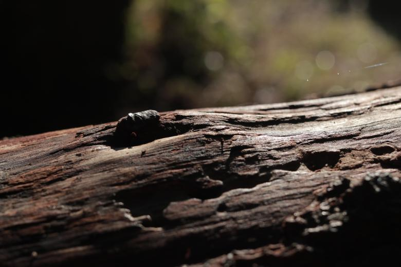 Free Stock Photo of Aged Wood Table Created by Yosafat
