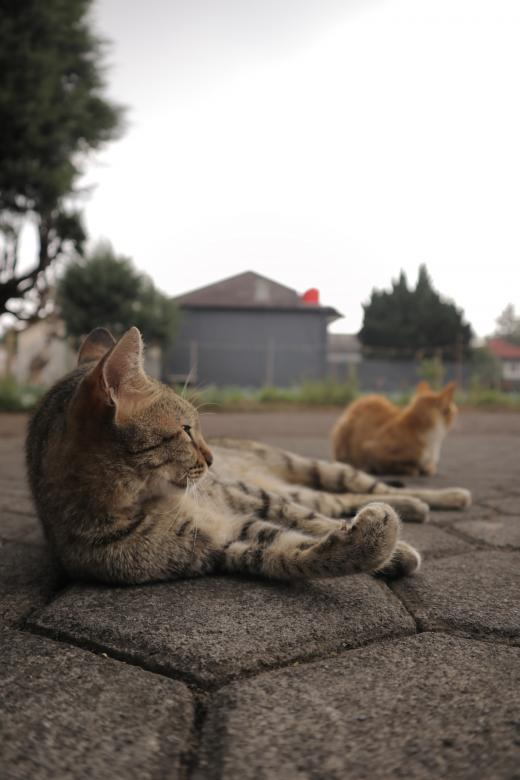 Free Stock Photo of Cats Posing Created by Yosafat