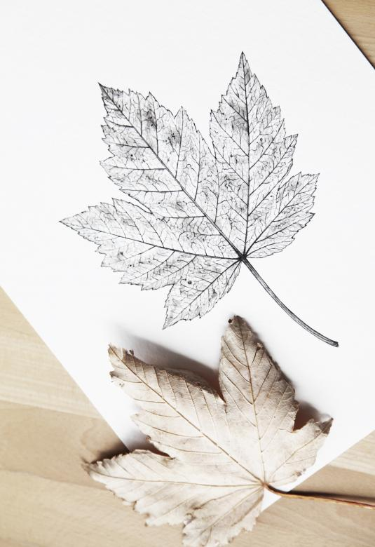 Free Stock Photo of Autumn Leaf - On Paper and Real Created by Nika Akin