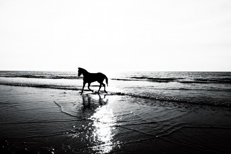 Free Stock Photo of Horse on the Beach Created by Nika Akin