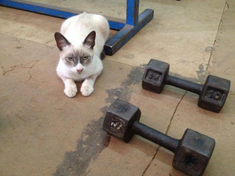 Free Stock Photo of A cute cat in the gym Created by MOSTAFA SAHNONI