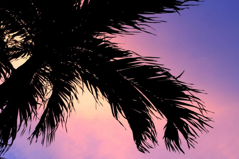 Free Stock Photo of Palm tree silhouette sunset background Created by Ivan