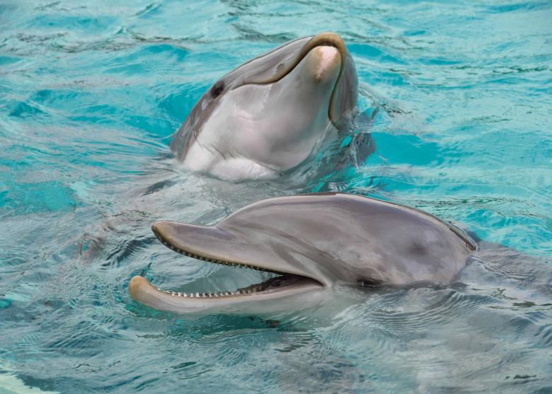 Free Stock Photo of Dolphins Playing Created by adam