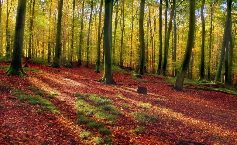 Free Stock Photo of Forest in Autumn Created by adam