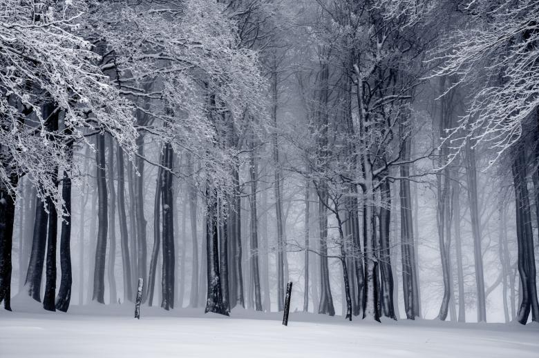 Free Stock Photo of Forest Winter Scene Created by adam