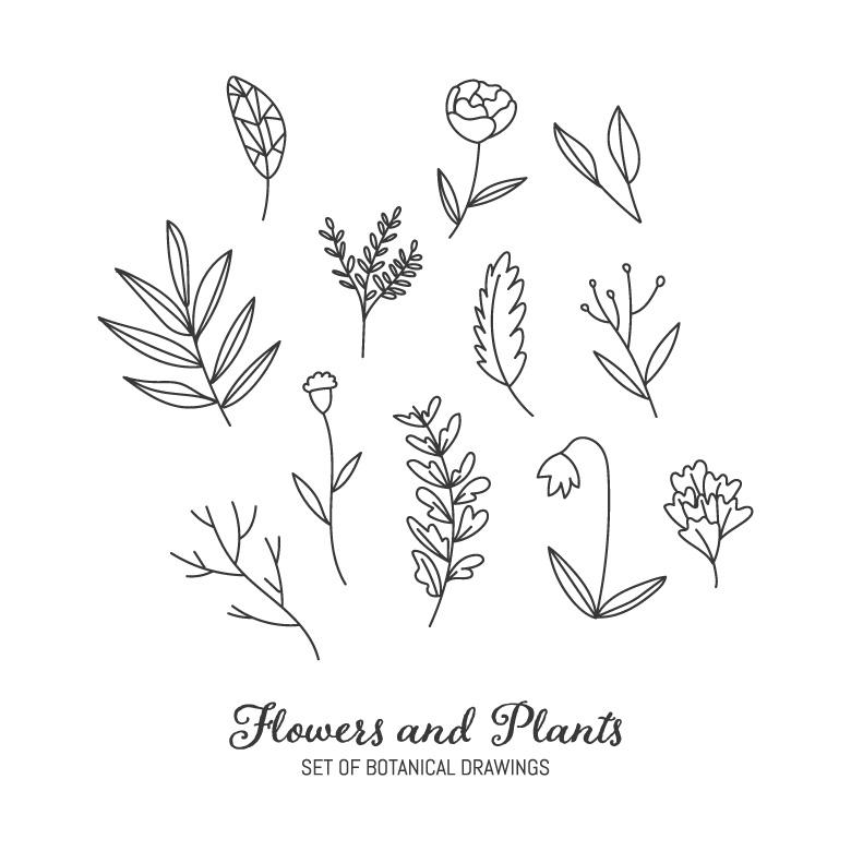 Free Stock Photo of Black & White Botanical Drawings Created by Sara