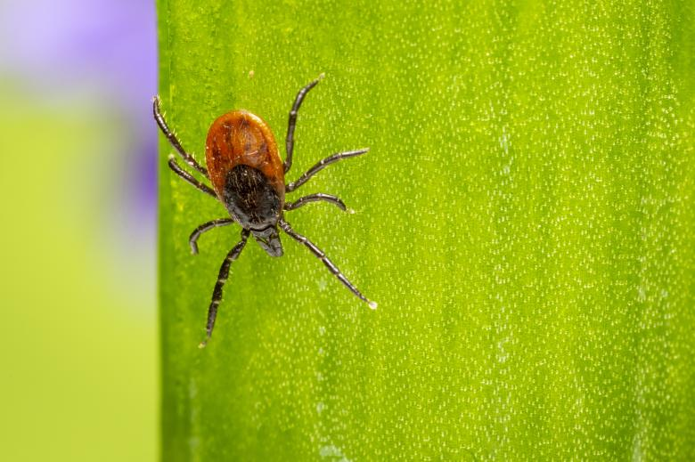 Free Stock Photo of Castor bean tick Created by Erik Karits