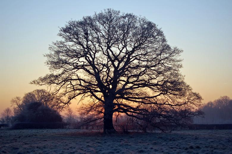Free Stock Photo of Winter Sunrise - Tree Silhouette Created by Paul Macallan