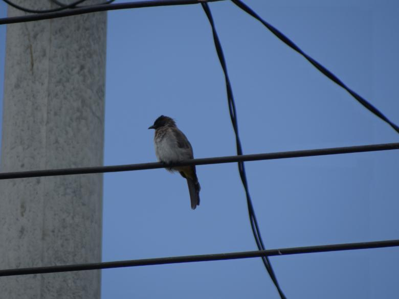 Free Stock Photo of Single Bird on Wire Created by Mikel Tana
