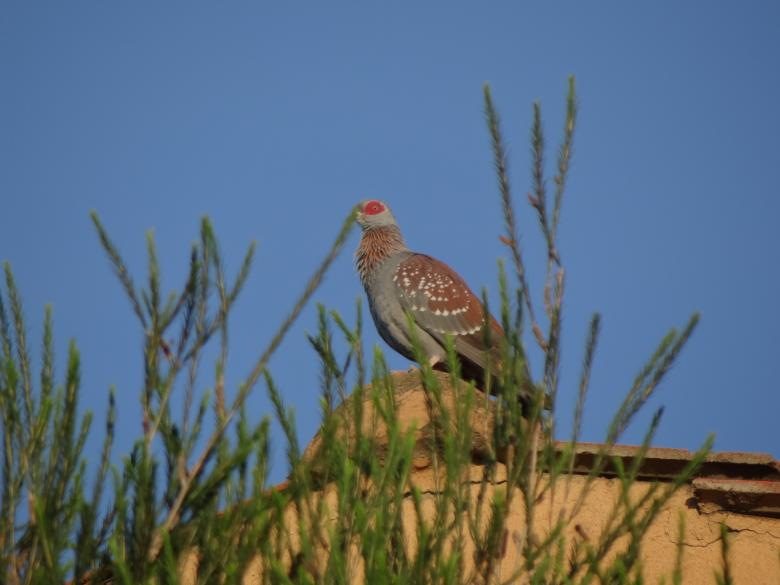 Free Stock Photo of Perched Bird on Roof Created by Mikel Tana