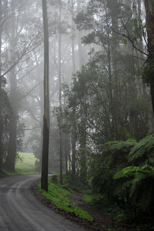 Free Stock Photo of Misty Road in the Woods Created by Paul Macallan