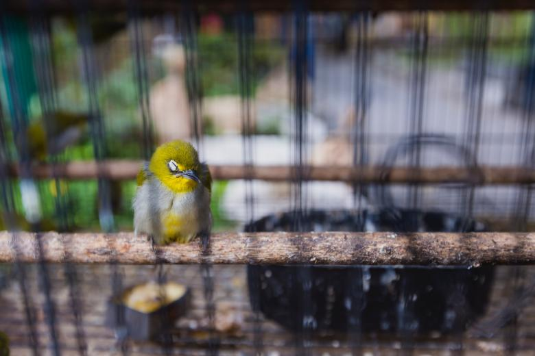 Free Stock Photo of Colorful bird for sale at market in Yogyakarta Created by Curioso Photography