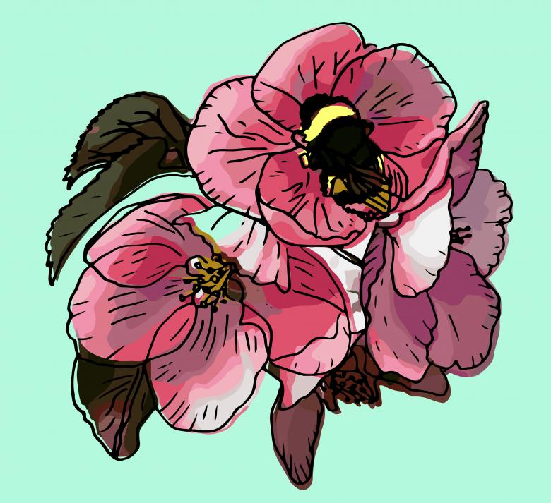 Free Stock Photo of Pink apple bloom and bumblebee vector Created by Julia Cherkinskaya