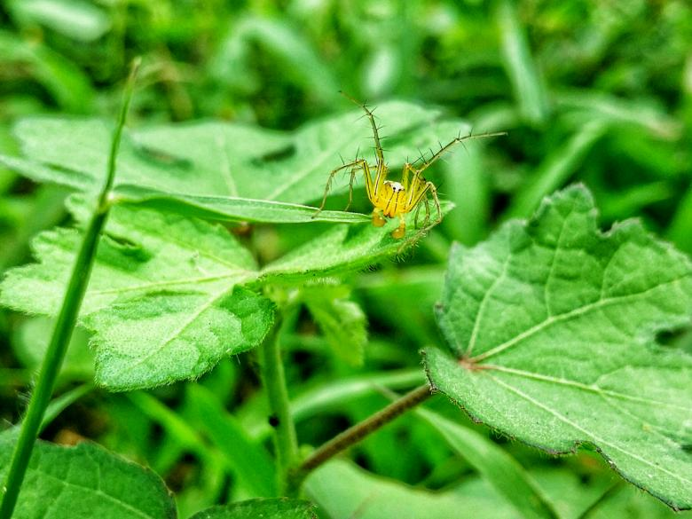 Free Stock Photo of Striped Lynx Spider Created by Nushrath Ahamed
