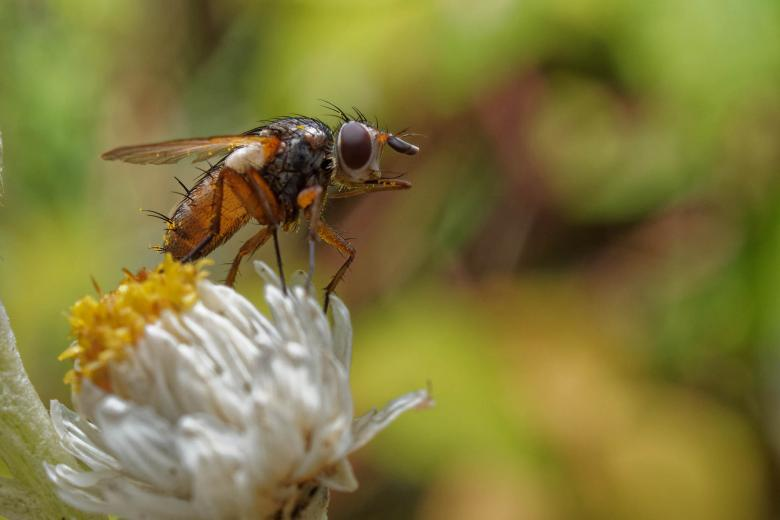 Free Stock Photo of Fly on a white and yellow flower Created by Geoffrey Whiteway
