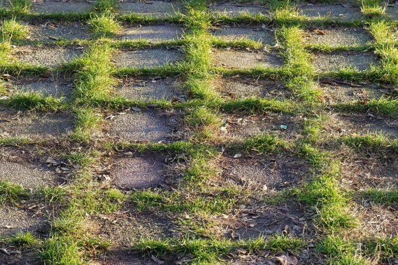 Free Stock Photo of Grass growing in the joints of the pavement Created by Mircea Iancu