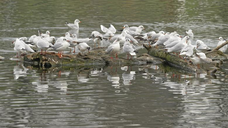 Free stock image of Lots of gulls on lake water created by Mircea Iancu